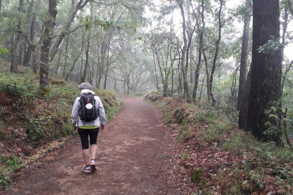 Camino de Santiago Patri